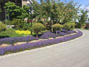 Best Abbotsford Landscape Maintenance | Transformations Landscaping