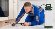 Guaranteed Pest Control Services at Best Prices in Mississauga GTA